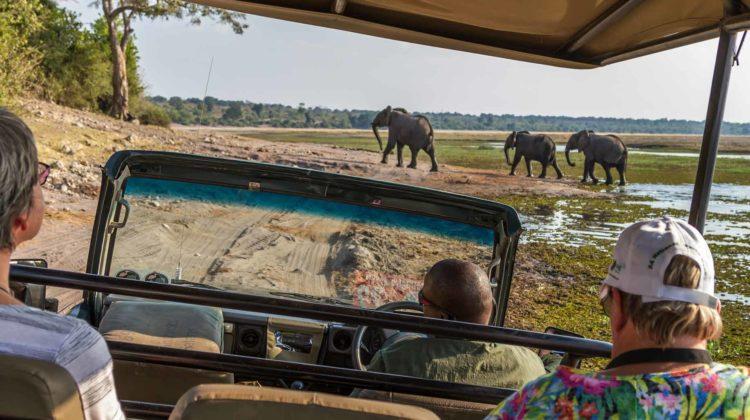 african safari tour elephants