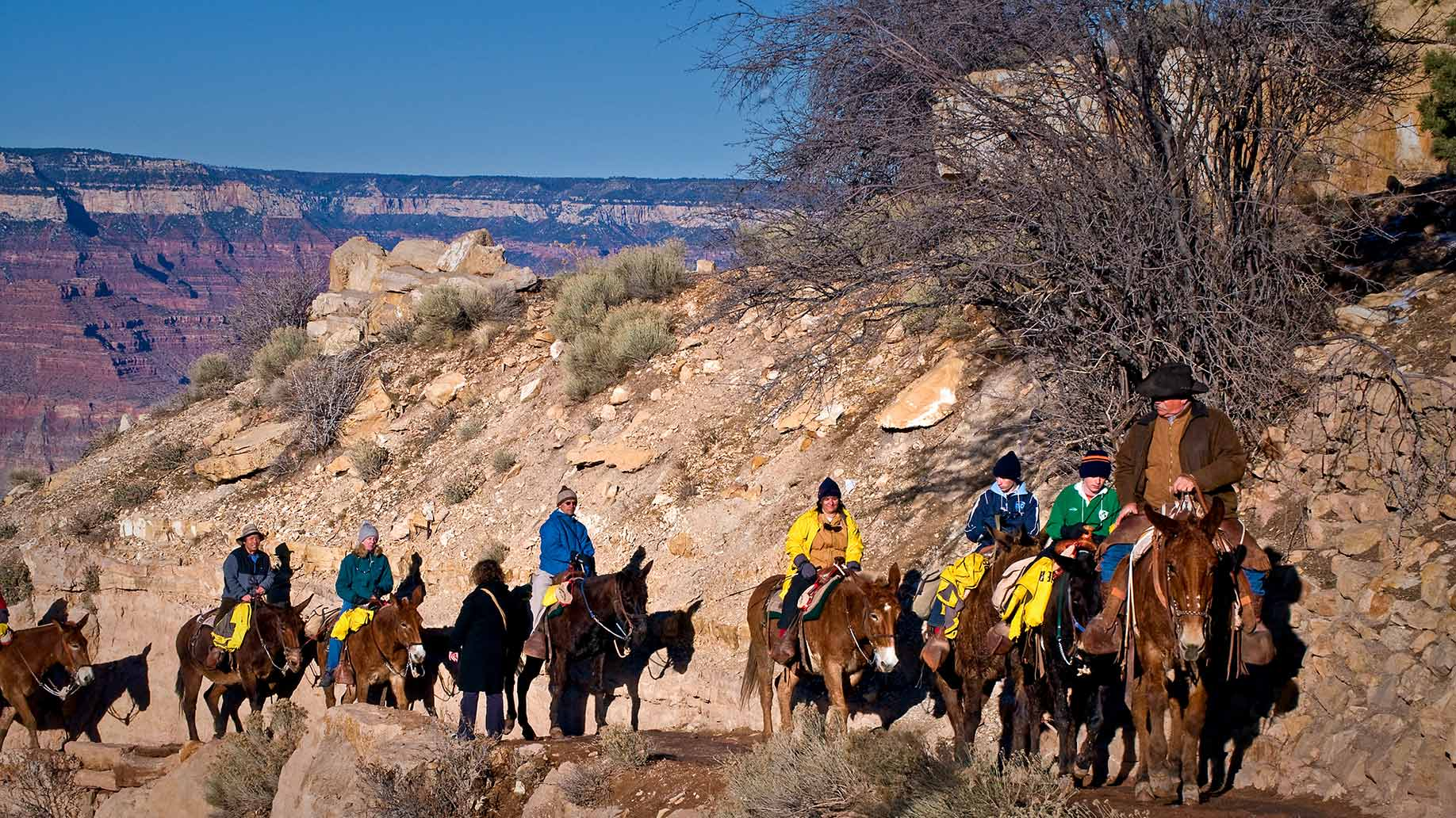 grand canyon tour mules
