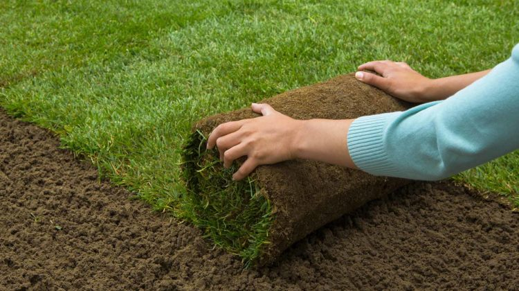 grass sod rolling