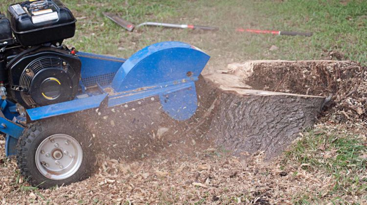 How Much Do Tree Stump Grinding & Removal Services Cost – Prices