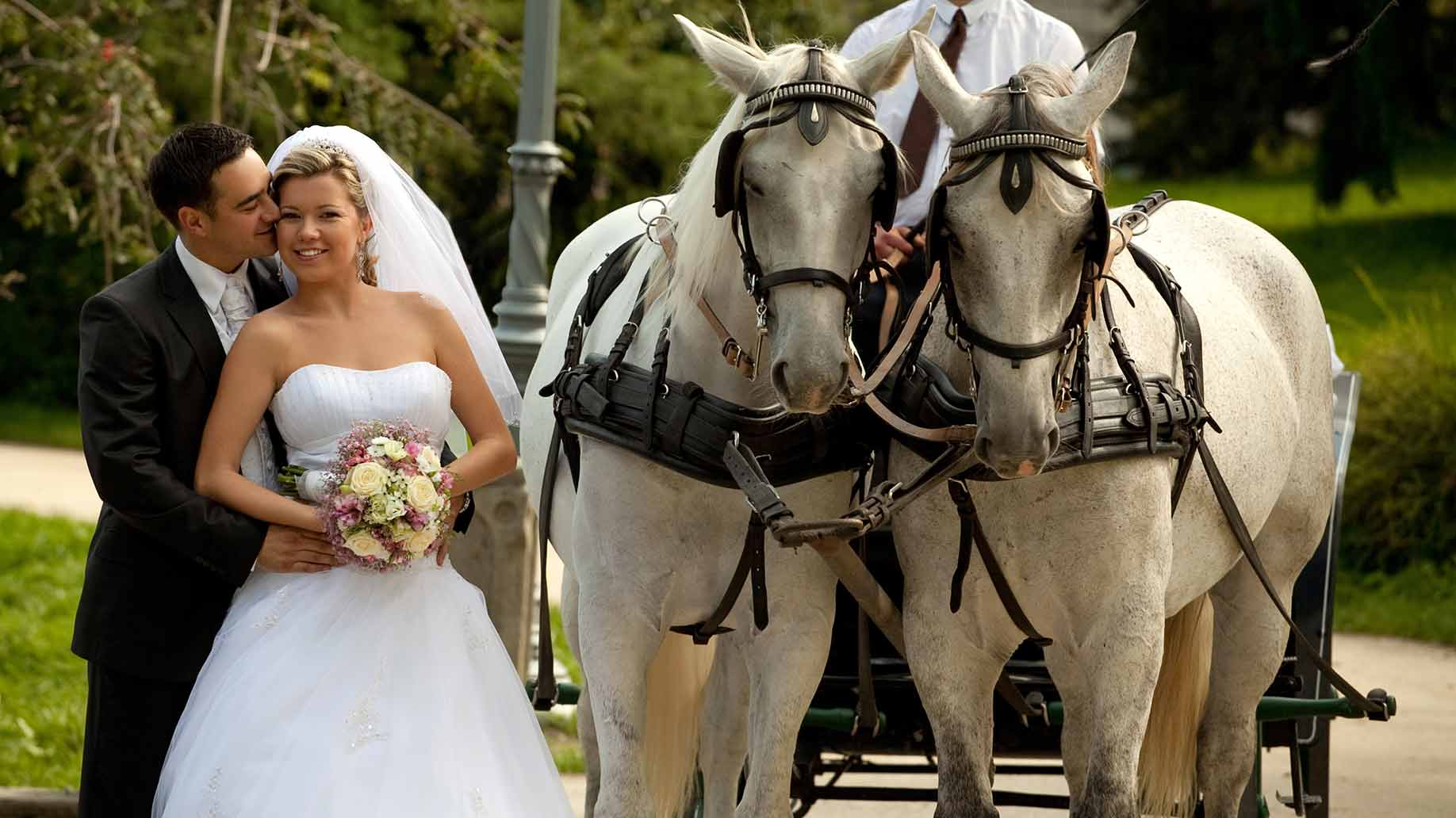 How Much Does A Wedding Horse Carriage Al Hire S